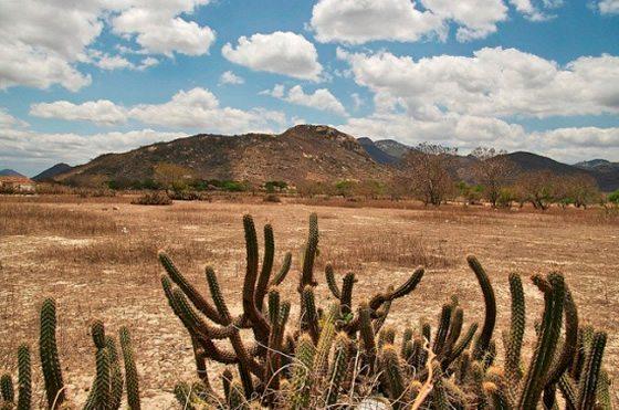 Vegetação Caatinga