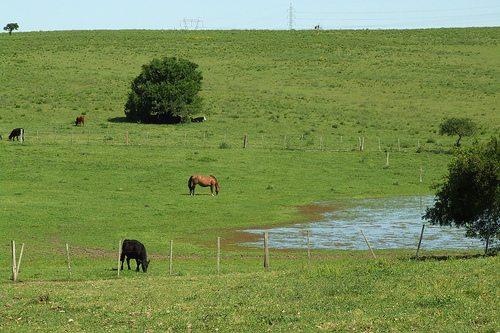 Vegetação pampas ou campo