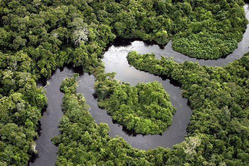 vegetação floresta amazonica
